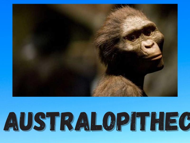 El Australopithecus